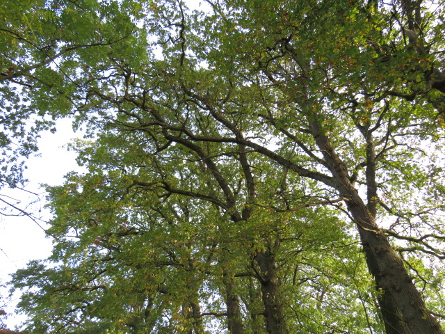 Baumpflege Baumkontrolle Baumgutachten